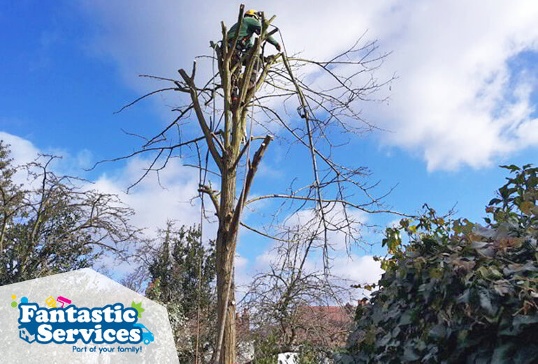 tree-surgery-1-crown-shaping-pruning