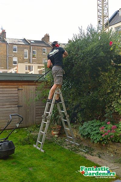 A landscaper trimming a hedge
