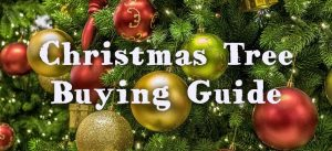 christmas tree guide header