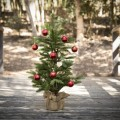 How to Care for a Real Christmas Tree | Easy to Follow Tips