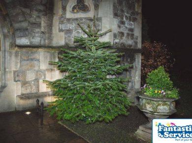 Royal trinity hospice christmas tree delivery service