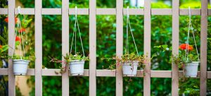 Maximum Height Allowed for a Garden Fence WITH Trellis