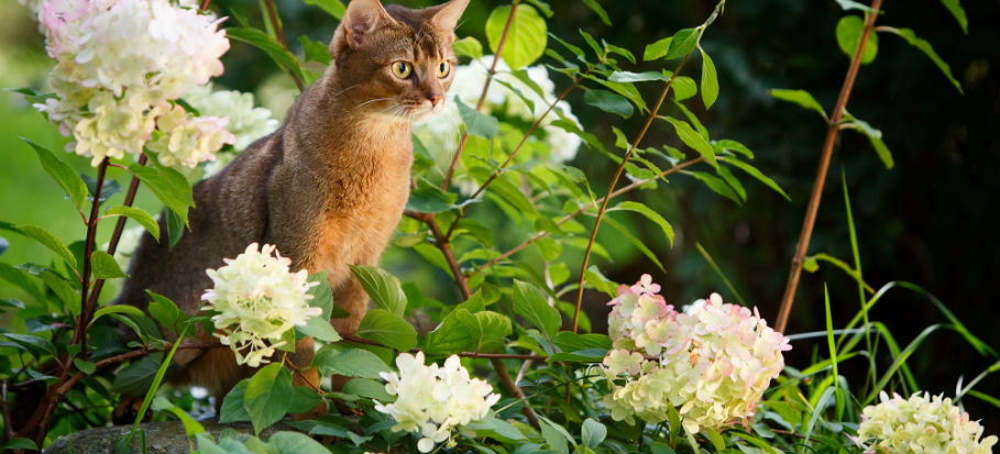 How to ACTUALLY Stop Cats from Fouling in Your Garden for Good?