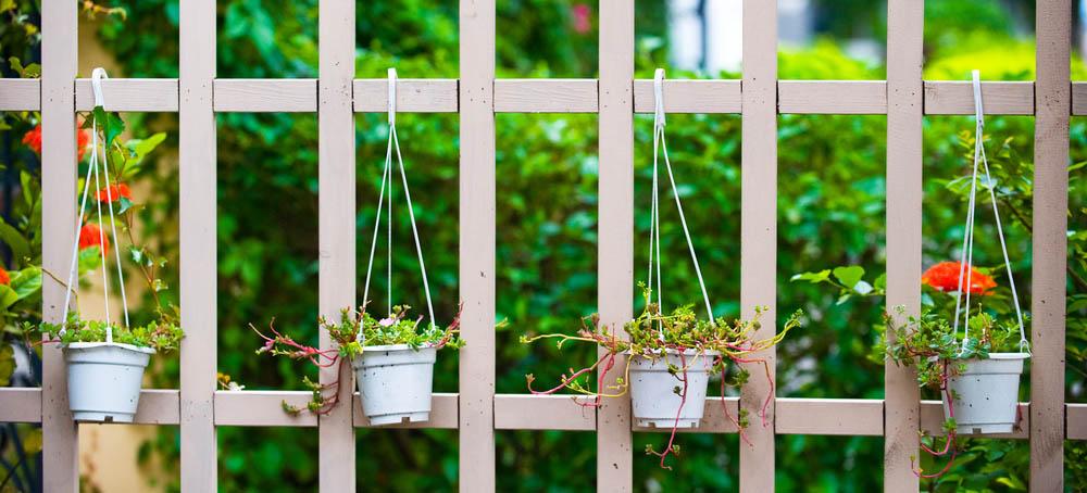 garden fence responsibility