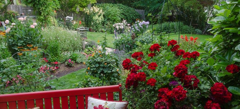 shade garden and shade garden plants