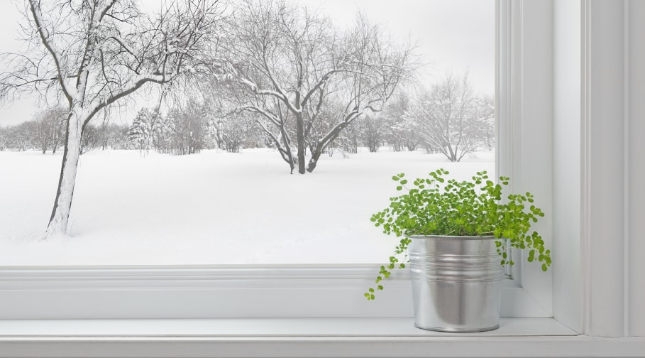 How to Easily Grow Herbs in Winter