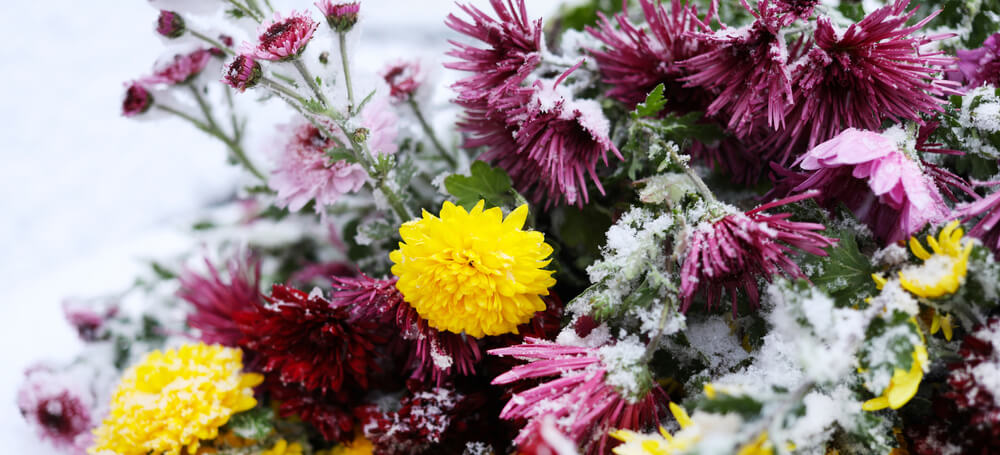 winter flowering plants for display