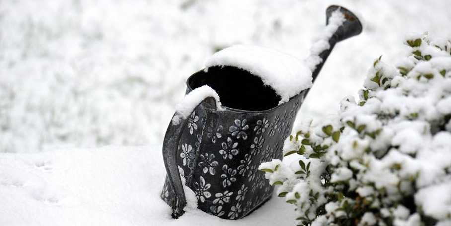 Winter Gardening - Everything You Need to Know About