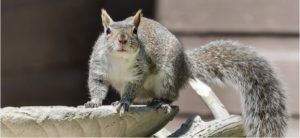 how to prevent squirrels from digging up the lawn