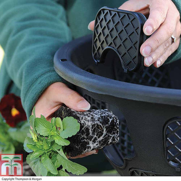 T_M-how-plant-hanging-basket-2