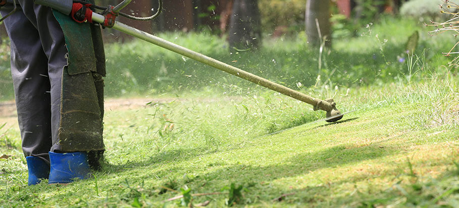 clearing a lawn