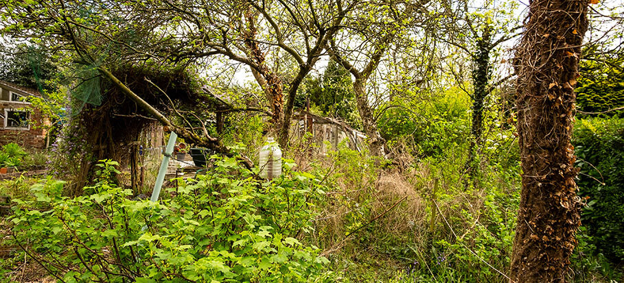 It S A Jungle Out There How To Clear An Overgrown Garden