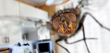 Get rid of flies in the house