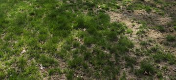 how-to-repair-a-patchy-lawn