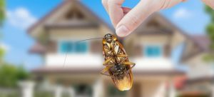 How to get rid of bugs in the house