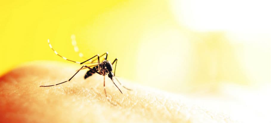How to get rid of bugs - mosquitoes
