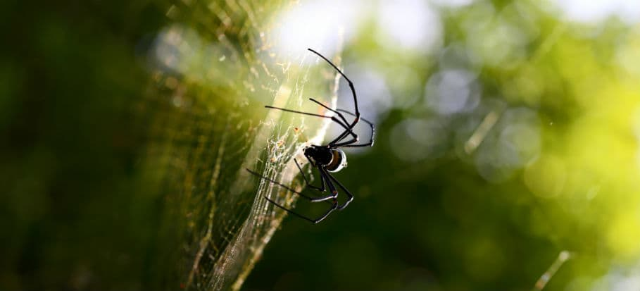 How to get rid of bugs - spiders