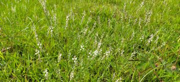 how to get rid of coarse grass in lawn