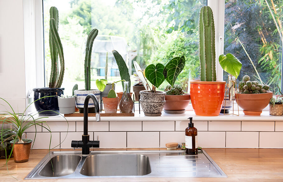 houseplants lighting guide by the plant rescuer
