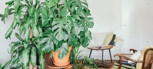 How and When to Repot Your Plant
