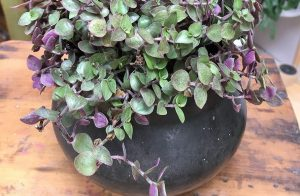plant in second hand pot