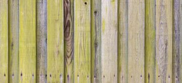 green algae on wooden fence