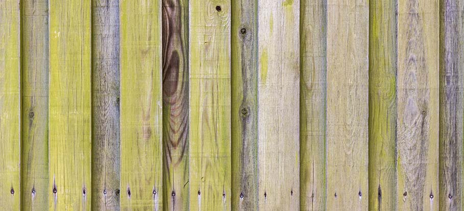 green algae on a wooden fence