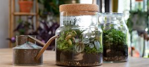 Small terrarium with plants