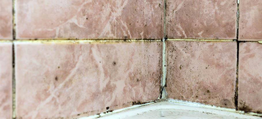 black-mold on bathroom tile grout