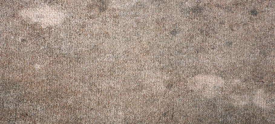 how-to-clean-mouldy-carpet