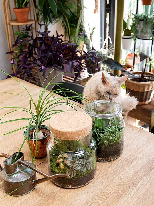 plant in jar