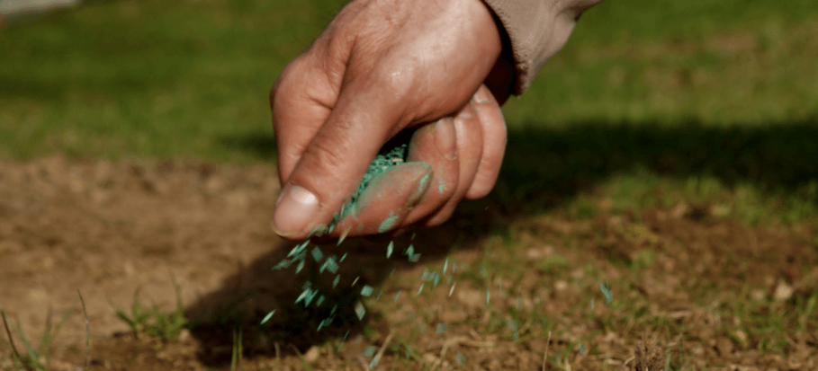 Overseeding a lawn in the UK