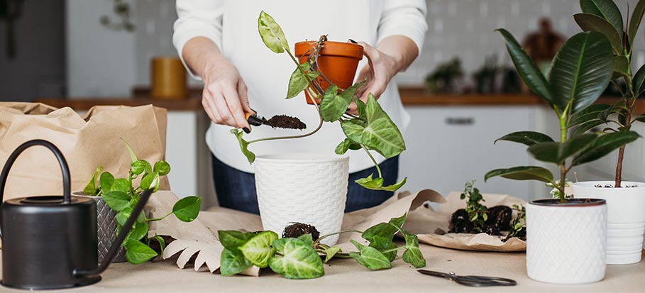 woman planting plant in new pot