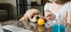 Are homemade disinfectants safe for pets