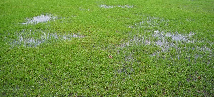 Waterlogged lawn remedy