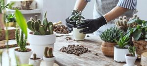 best beginners houseplants