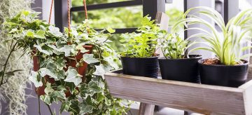 make your own small space vegetable garden
