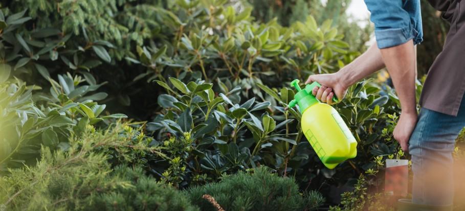 man spraying bushes in garden