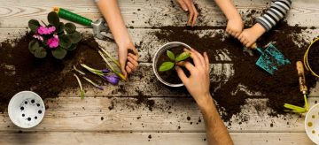 hands planting plant in pot