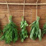 herb gardening