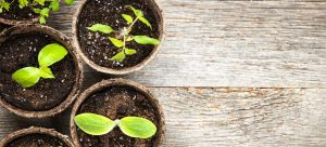 types of potting soil