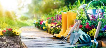 Quick tips on gardening during the heatwave in the UK