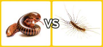 centipede vs millipede