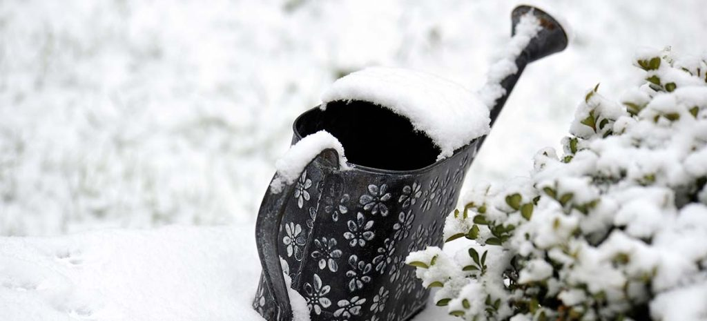 The Ultimate Guide to Winter Gardening