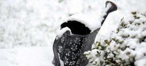 Guide to Winter Gardening