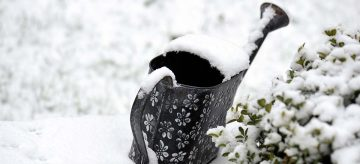 Guide to Winter Gardening