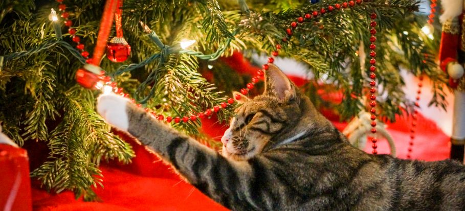 cat touching christmas tree with it paw