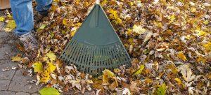 garden rake in leaves