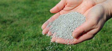 hands holding lawn fertiliser