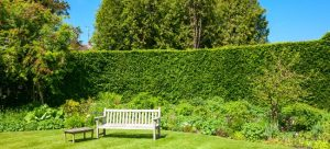 garden with a trimmed hedge